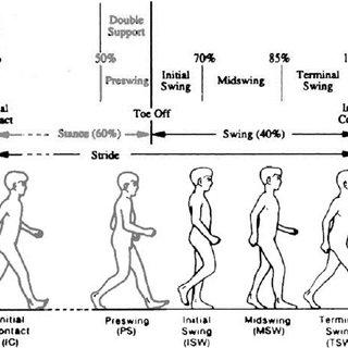 (PDF) Genetic Algorithm Application in Swing Phase