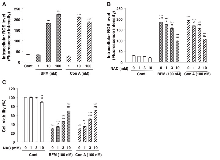 Effects of the V-ATPase inhibitors bafilomycin A1 and