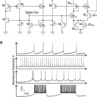 Axon-hillock circuit. (A) Schematic diagram; (B) Membrane