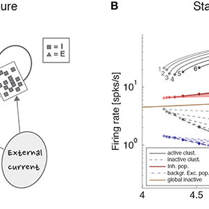 (PDF) Stimuli Reduce the Dimensionality of Cortical Activity