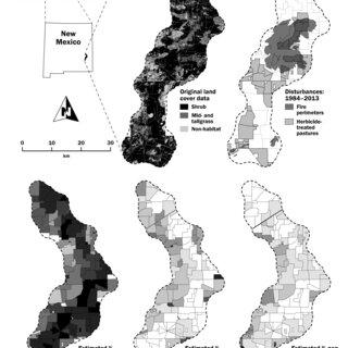 (PDF) Modelling environmental and survey influences on lek