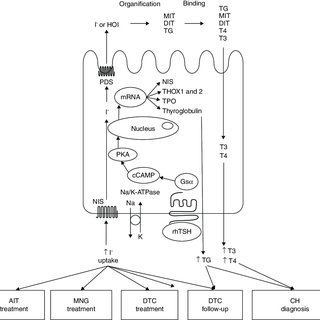 (PDF) Recombinant human thyrotropin in the management of