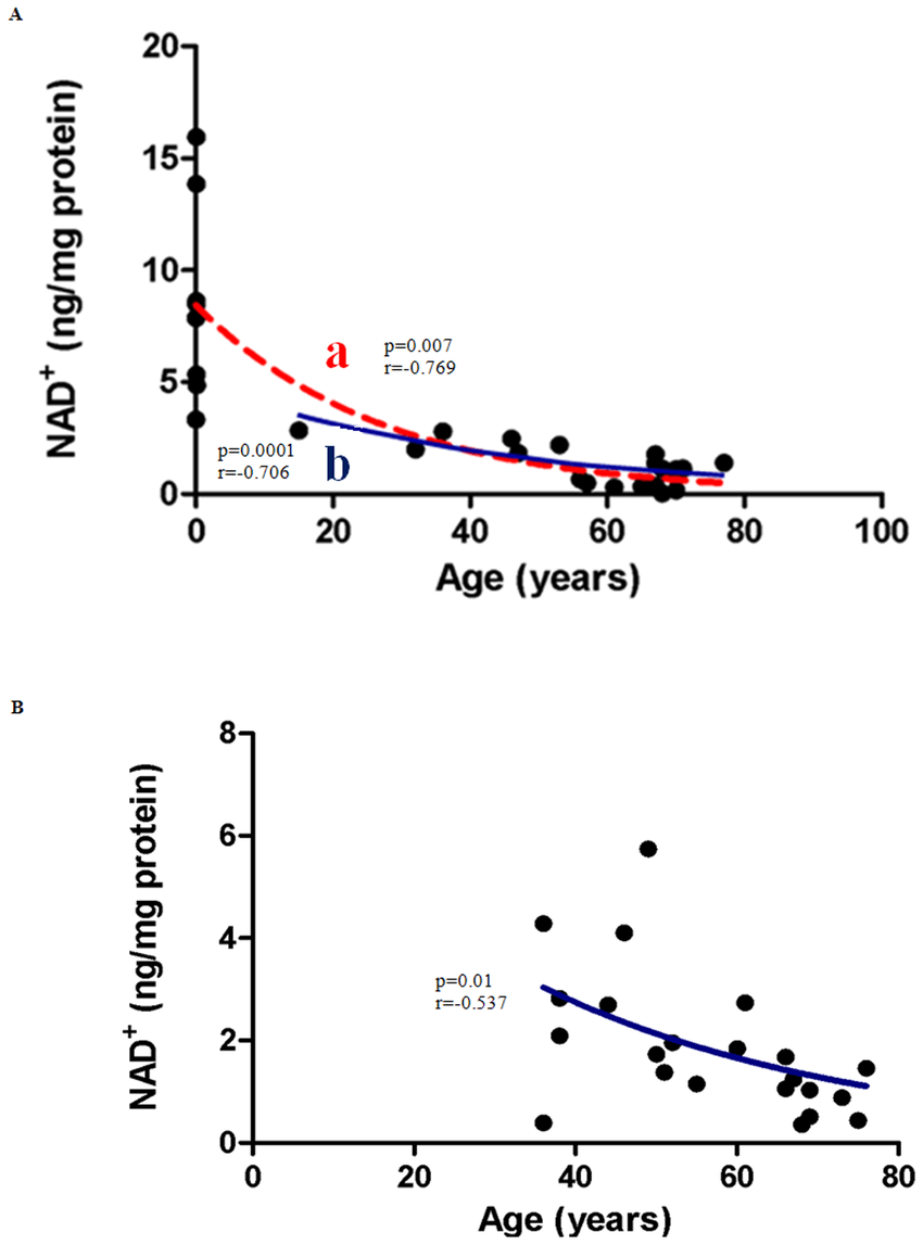 Correlation between NAD+ levels and Age in (A) Males (B