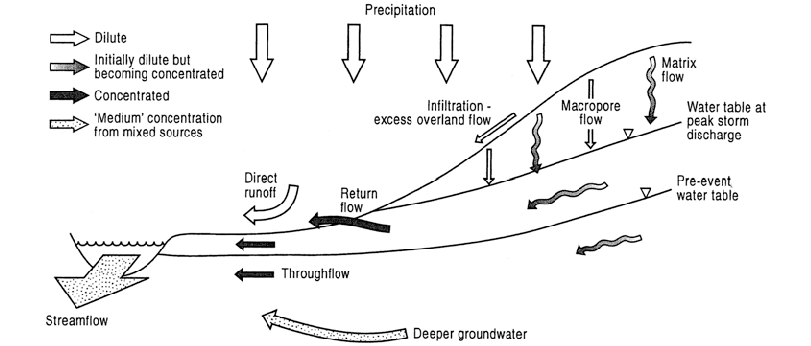A schematic diagram of solute transport within a hillslope