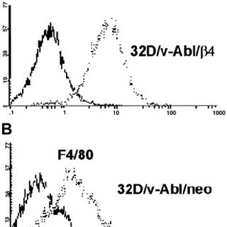 Effects of ␤ 4 integrin expression on the cell cycle of