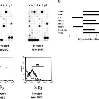 (PDF) Human pancreatic islet endothelial cells express
