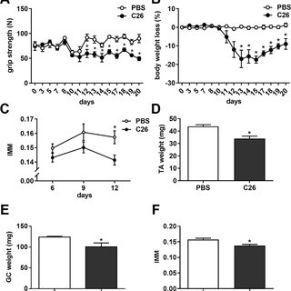 SOD1 G93A mice have a lower hind limb muscle mass than Ntg