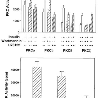 (PDF) Insulin-Activated Protein Kinase C Bypasses Ras and