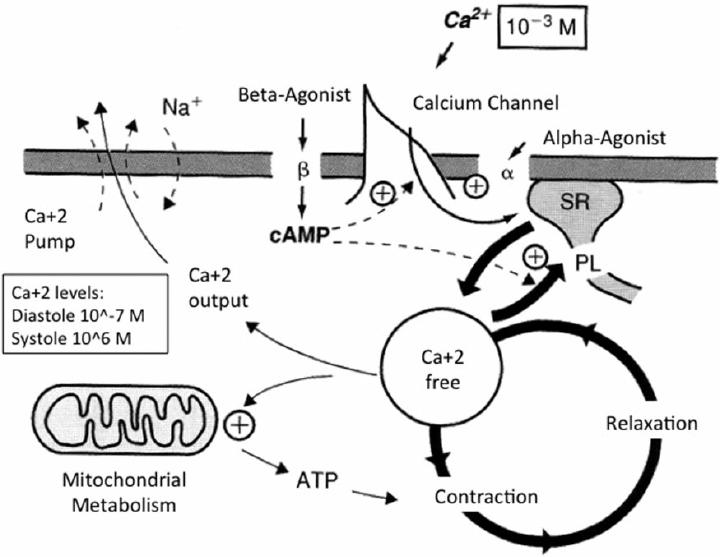 Schematic representation to explain the molecular