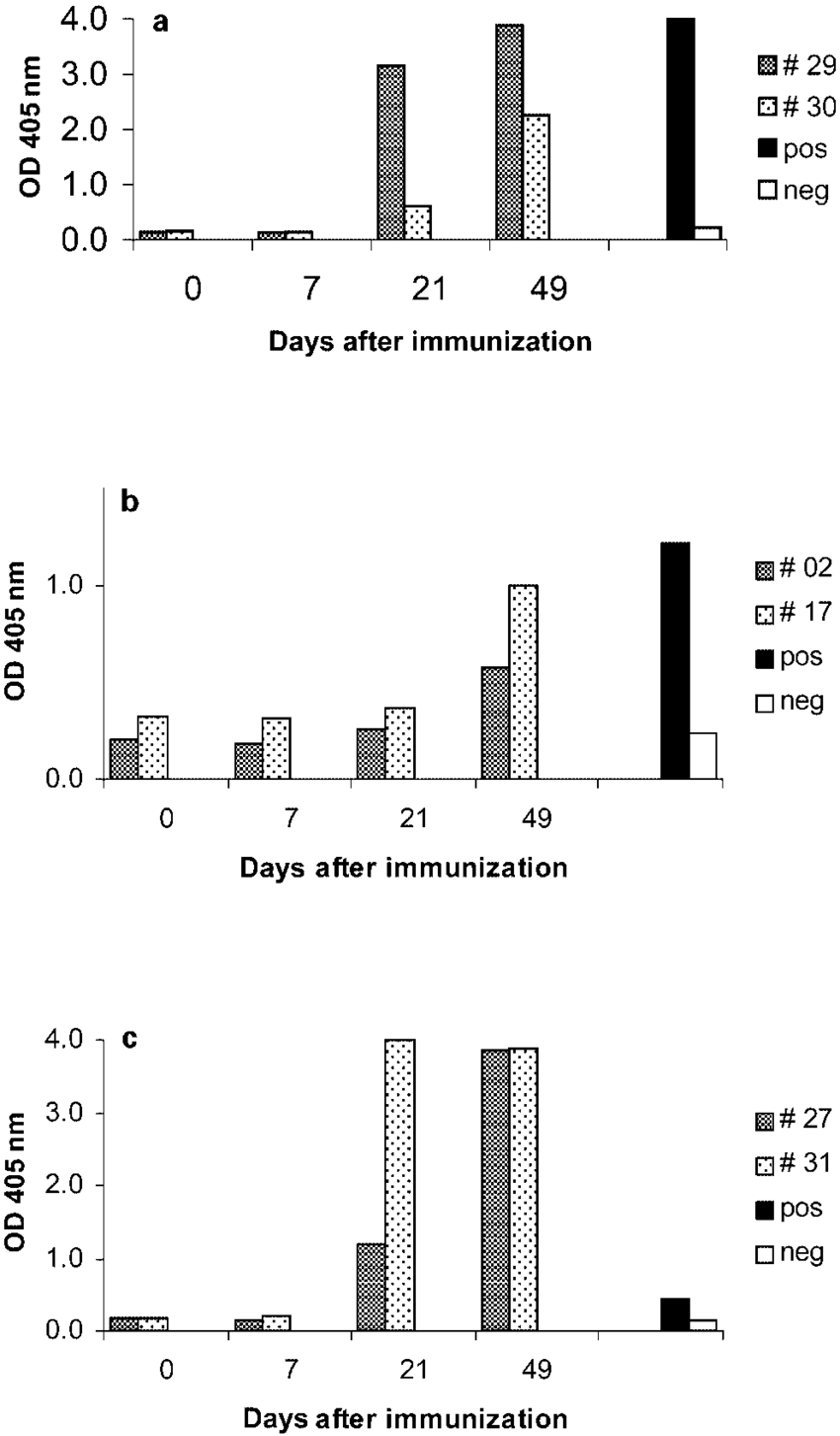 hight resolution of radioimmunoprecipitation with the serum of a caevinfected goat lane 1 a seronegative goat