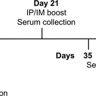 The influenza virus with surface proteins hemagglutinin