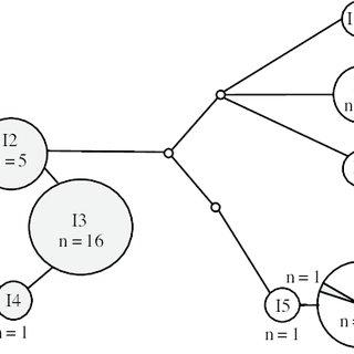 (PDF) Phylogeography of Padina boryana (Dictyotales
