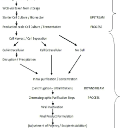 standard production process flow diagram biotechnological products 20 22  [ 848 x 1470 Pixel ]