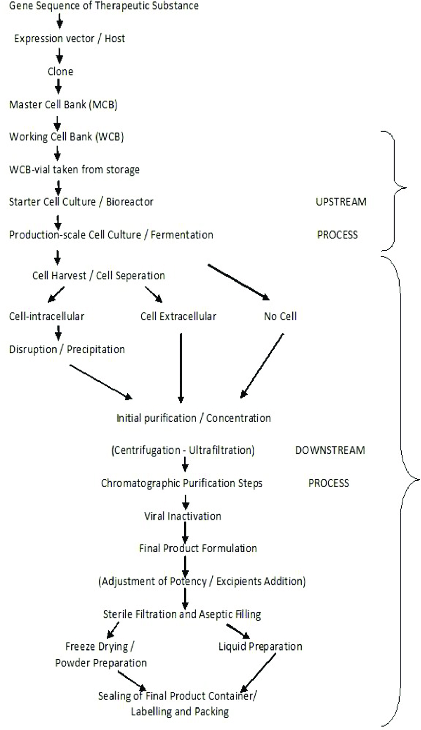medium resolution of standard production process flow diagram biotechnological products 20 22