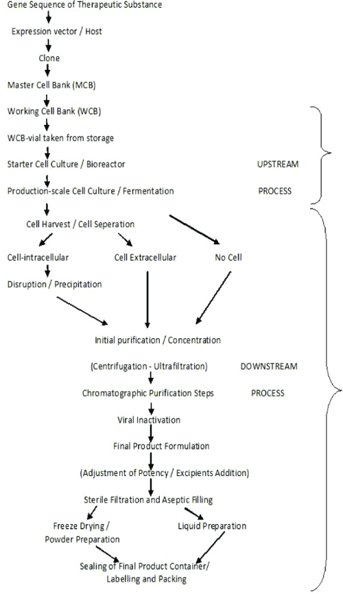 small resolution of standard production process flow diagram biotechnological products 20 22