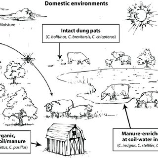 (PDF) Bionomics of Temperate and Tropical Culicoides