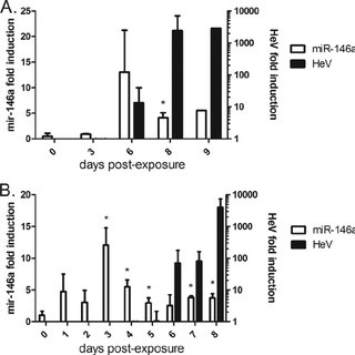 Hendra virus induces miR-146a in vitro via RIG-I (A) miR