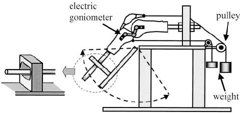 A schematic diagram of the experimental setup. The femur