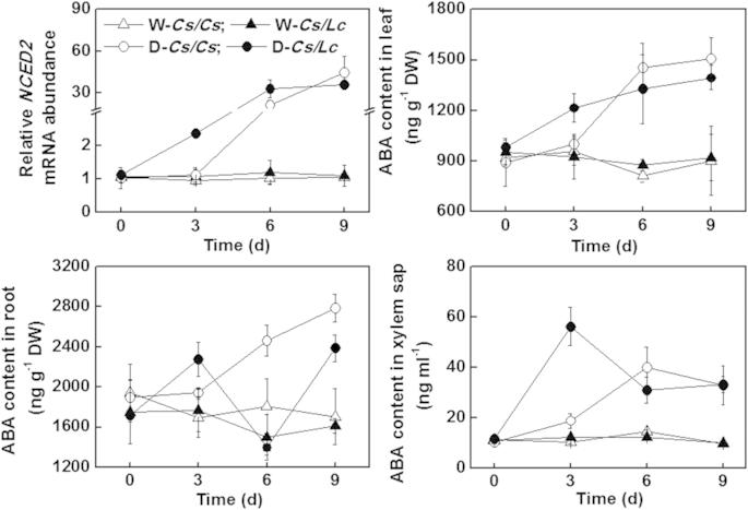 Transcript abundance of ABA biosynthetic gene in leaves