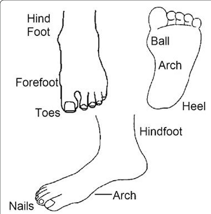Foot pain map used for selfreport of location of foot