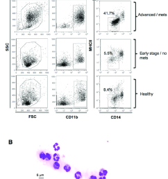 immunophenotyping gating strategy and morphological analysis for mdsc identification in peripheral blood of dogs pbmcs from healthy dogs and dogs with  [ 850 x 977 Pixel ]