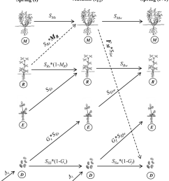 life cycle diagram of feral alfalfa used in defining the alfalfa seed diagram [ 850 x 947 Pixel ]