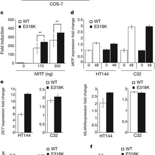 Co-segregation analysis of the MITF E318K variant in the