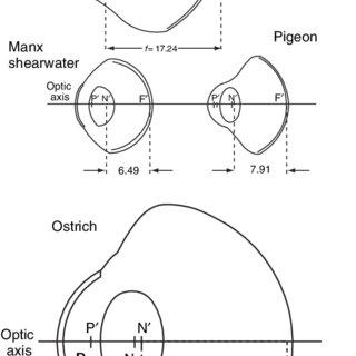 (PDF) Vision in Birds