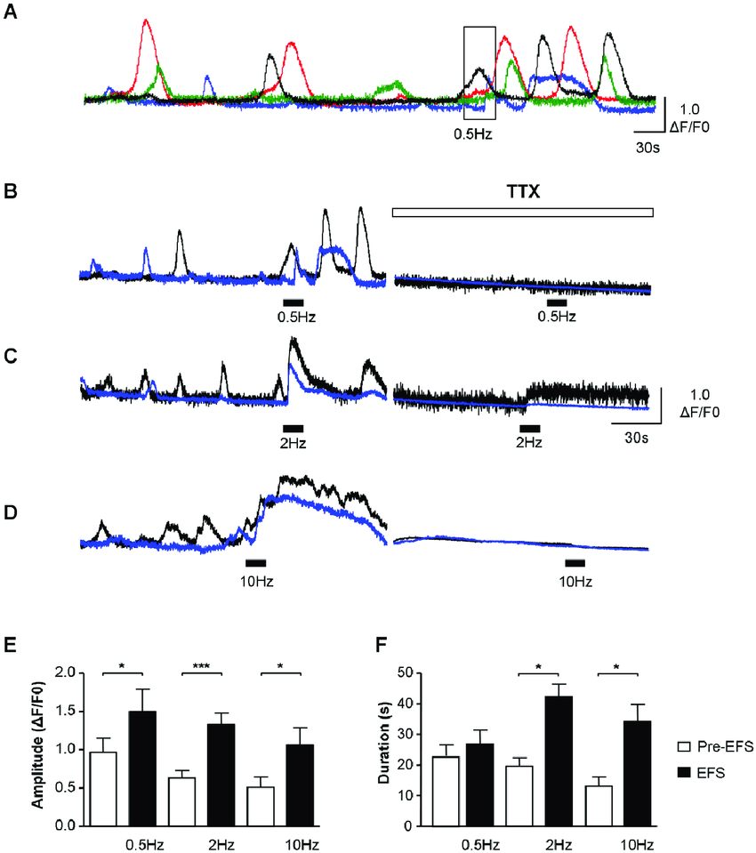 hight resolution of functional innervation of icc lp a d example of icc lp within a