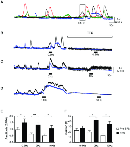 small resolution of functional innervation of icc lp a d example of icc lp within a