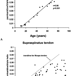 a the age product pentosidine accumulates in a linear fashion with increasing age in the human biceps brachii tendon these tendons were histologically  [ 850 x 1417 Pixel ]