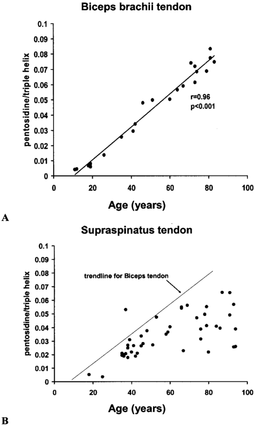 small resolution of  a the age product pentosidine accumulates in a linear fashion with increasing age in the human biceps brachii tendon these tendons were histologically