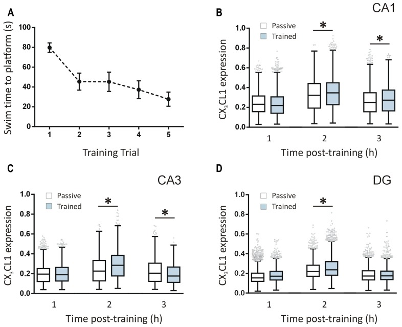 Temporal changes in CX3CL1 expression in the rat