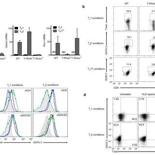Rheb controls mTORC1 activity in T cells. (a) Immunoblot