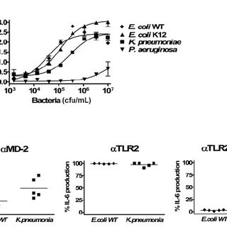 TLR-specific activation of HUVECs. (A) Induction of IL-6
