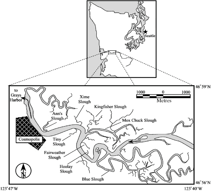 General location of the estuarine sloughs of the lower