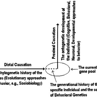 (PDF) The Tree of Knowledge System and the Theoretical