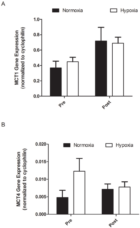 The MCT1 (A) andMCT4 (B) protein content for the normoxic