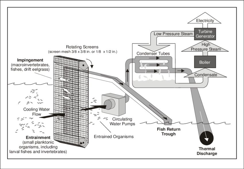 Conceptual diagram of power plant cooling water systems at