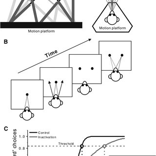 (PDF) Evidence for a Causal Contribution of Macaque