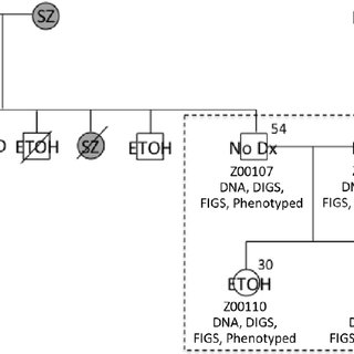 Modified' central dogma. The central dogma of molecular