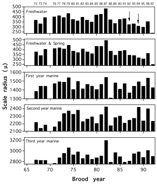 small resolution of mean cumulative scale radii measurements of kenai river sockeye salmon download scientific diagram