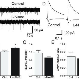 Regulation of local, activity-dependent spine growth by NO