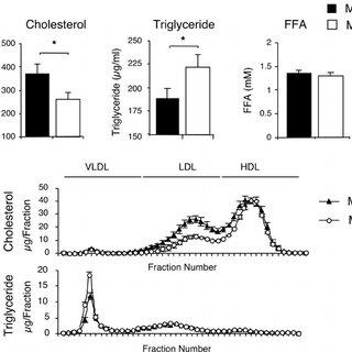 Effect of muscle-specific JNK1 deficiency on insulin