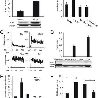 (PDF) Hydrogen sulfide (H2S) metabolism in mitochondria
