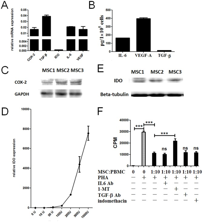 (A): QPCR analysis of the expression of IL-6, TGF-β, IDO