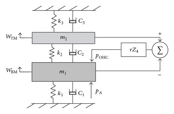 A circuit diagram for the inner and outer hair cells