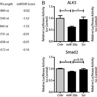miR-20a targets TGFβ signaling at the receptor level. (A
