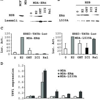 Transcriptional Activity of ER in the Presence of Ral or