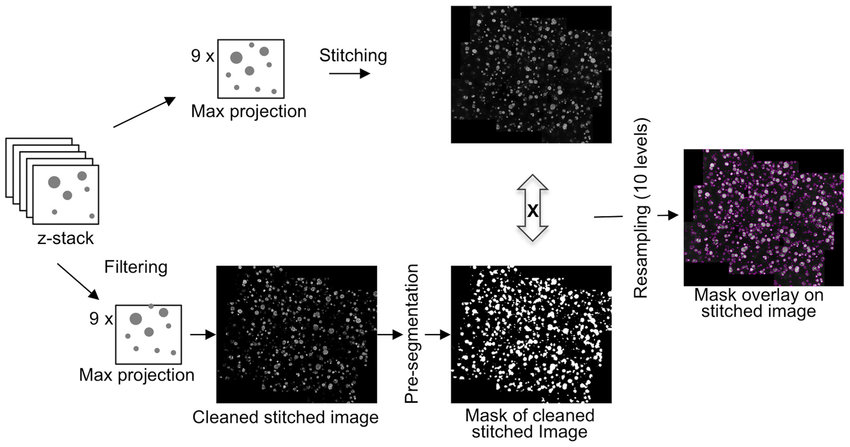 Image processing and feature extraction. A schematic